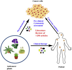 Plant Derived Anticancer Agents A Green Anticancer Approach Sciencedirect
