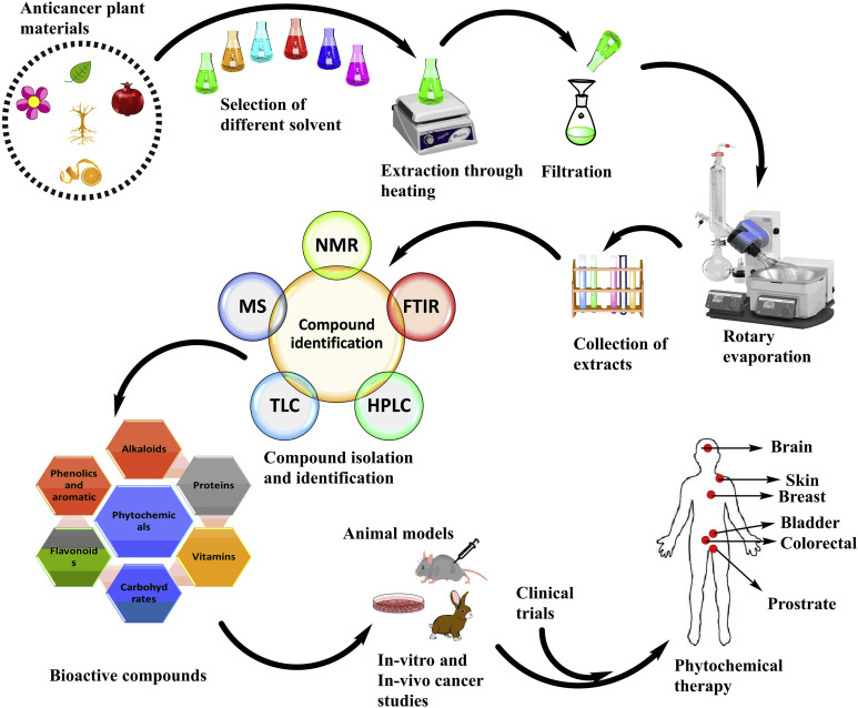 Plant-derived anticancer agents: A green anticancer approach