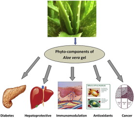 Evaluation of biological properties and clinical
