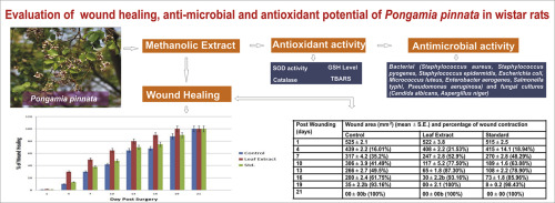 Evaluation of wound healing, anti-microbial and antioxidant