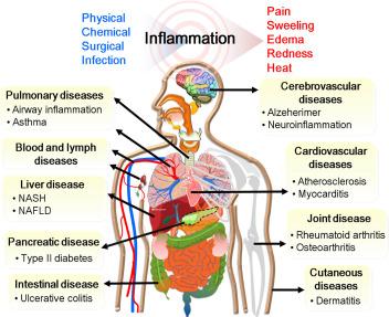 Anti-inflammatory activity of traditional Chinese medicinal