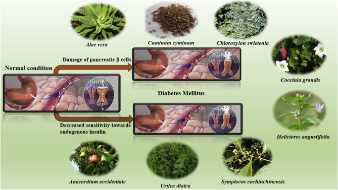 An update on natural compounds in the remedy of diabetes mellitus: A