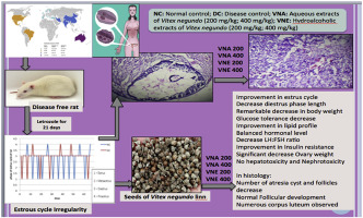 Effect of Vitex negundo L  seeds in letrozole induced