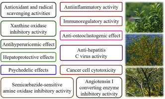 A Review Of Antioxidant And Pharmacological Properties Of Phenolic