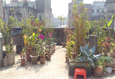 Present Practice And Future Prospect Of Rooftop Farming In Dhaka