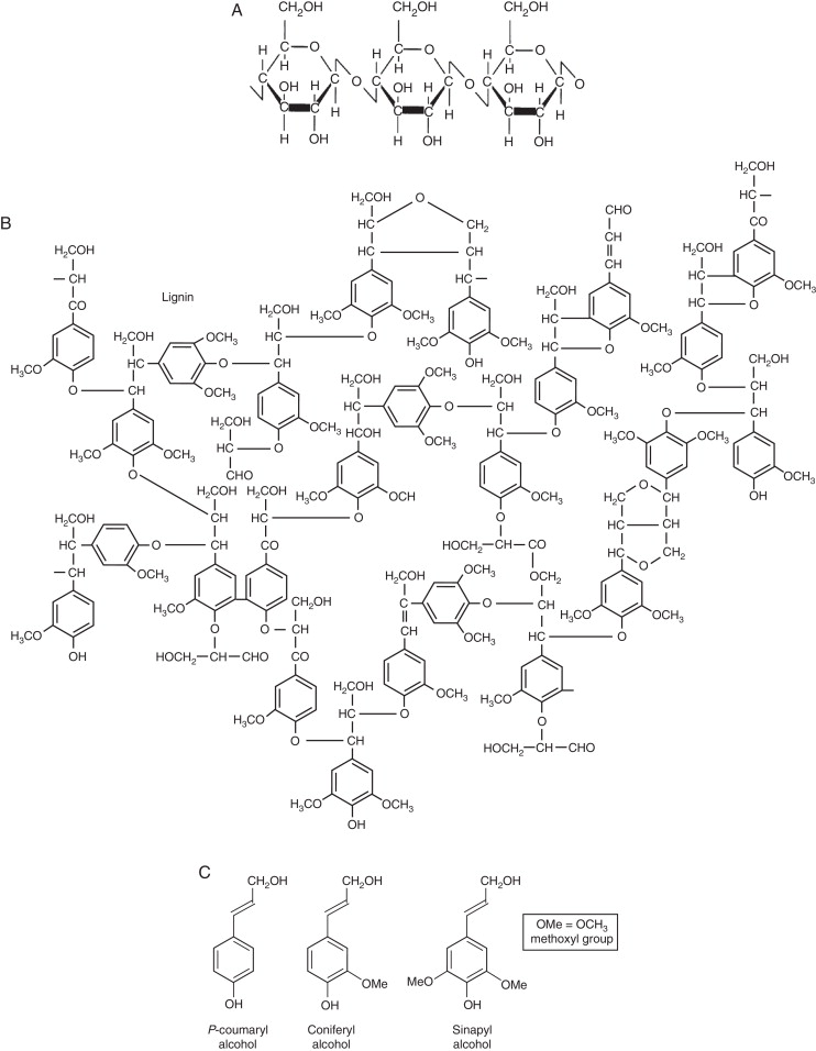 Extraction And Characterization Of Lignin From Different Biomass