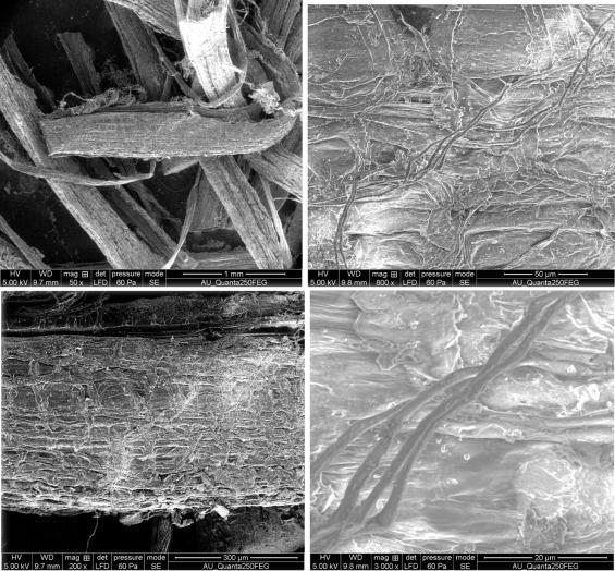 Characterization of new cellulosic fiber: Dracaena reflexa