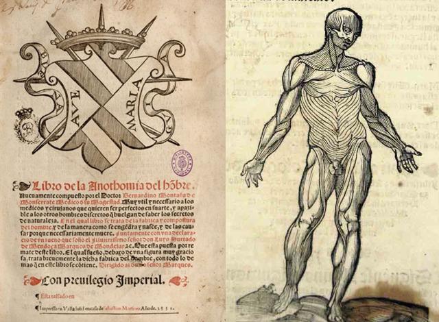 Aportaciones de los anatomistas españoles del Renacimiento ...