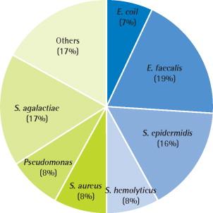 A ureablasm prostatitis