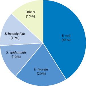 A mycoplasma által okozott prostatitis