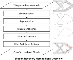 Automated cross-sectional shape recovery of 3D branching