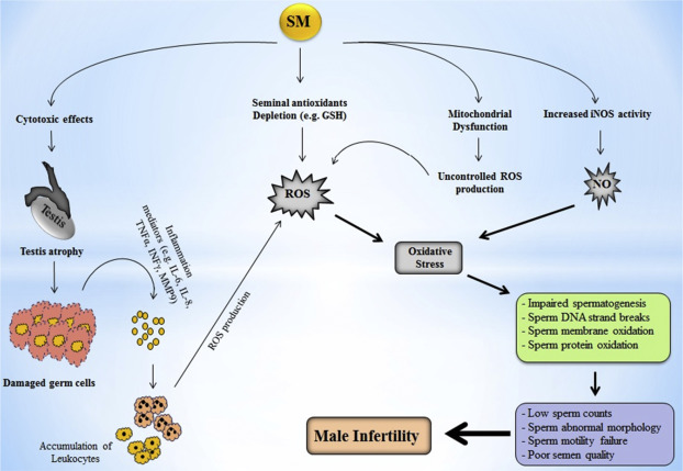 sperm Chemical damage exposure