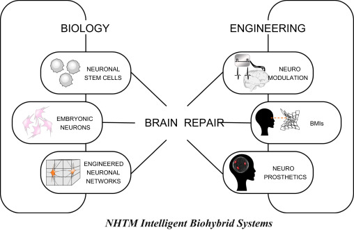 Intelligent biohybrid systems for functional brain repair biological and engineering approaches to functional brain repair schematic renditions of the currently available biological left and engineering right ccuart Gallery