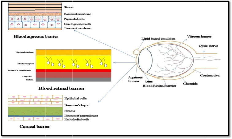 Therapeutic Challenges In Ocular Delivery Of Lipid Based Emulsion