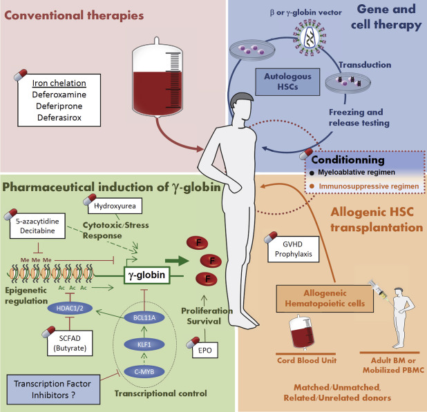 Current and future alternative therapies for beta-thalassemia major - ScienceDirect