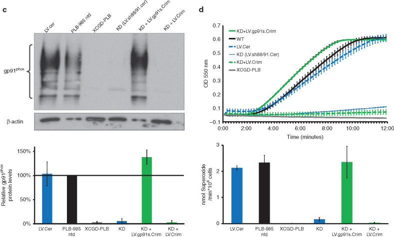 Generation of x cgd cells for vector evaluation from healthy donor knock down and re expression of gp91phox in plb 985 cells ccuart Image collections
