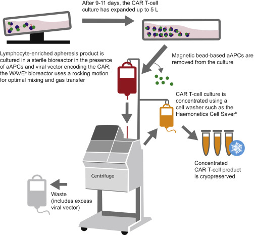 Global Manufacturing Of Car T Cell Therapy Sciencedirect
