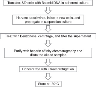 Purification of baculovirus vectors using heparin affinity