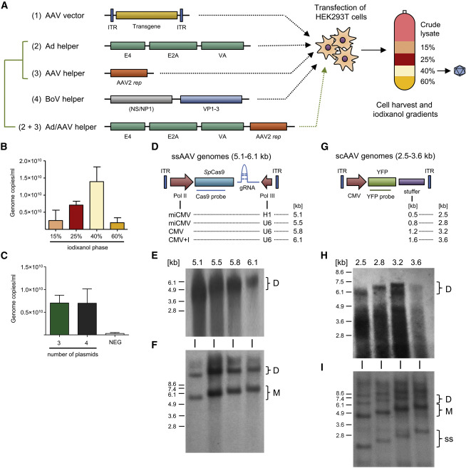 Novel Chimeric Gene Therapy Vectors Based on Adeno