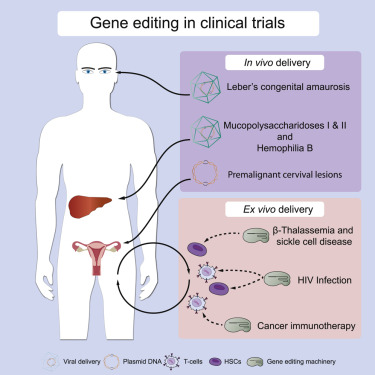 Cancer human genetic disease. Traducere