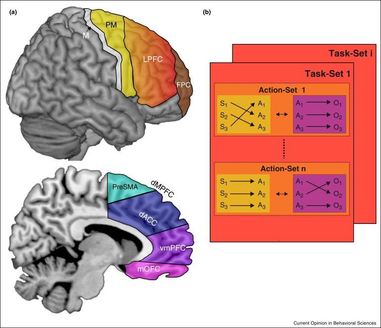 executive control and decision making in the prefrontal cortex