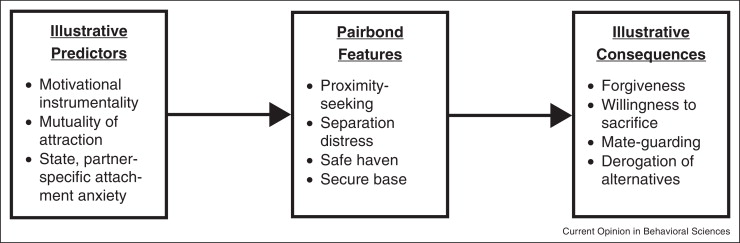 Attachment and pairbonding - ScienceDirect