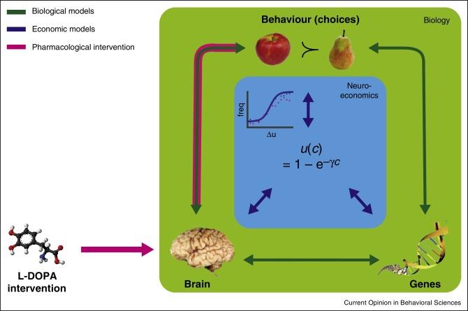 From behavioural economics to neuroeconomics to decision