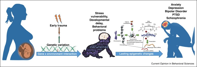 Early Life Stress Can Have Lasting >> Interactions Of Early Life Stress With The Genome And Epigenome