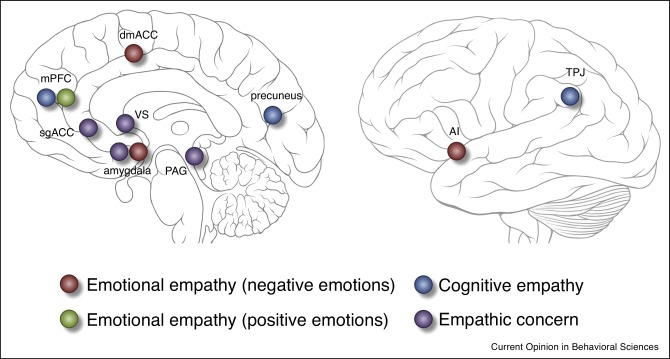 The neuroscience of empathy - ScienceDirect