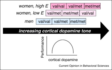 Addiction and dopamine: sex differences and insights from