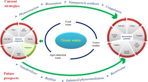 Bioremediation potential of natural polyphenol rich green