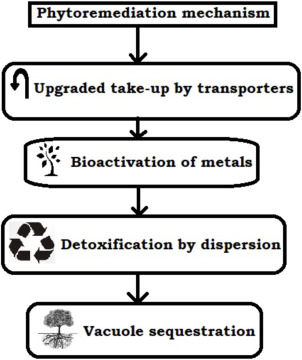 Removal of toxic pollutants from water environment by