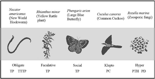 Hostparasite Interactions In Food Webs Diversity Stability And