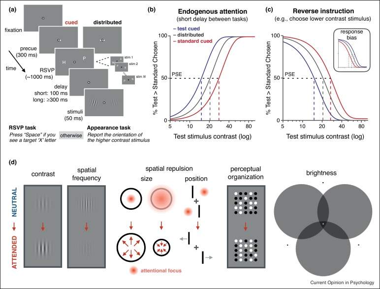 Spatial attention alters visual appearance - ScienceDirect