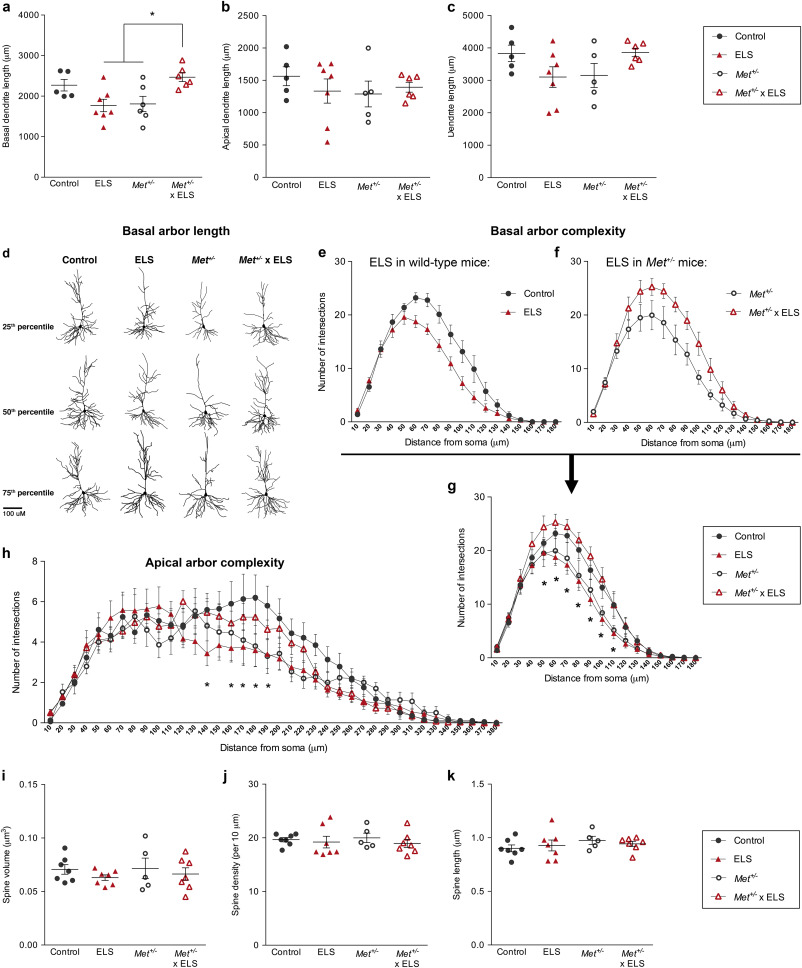 Differential Impact Of Met Receptor Gene Interaction With Early Life