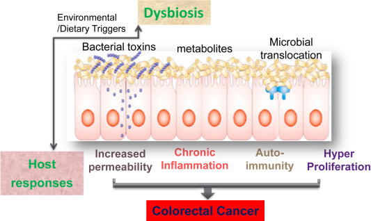 Gut Microbiota Inflammation And Colorectal Cancer Sciencedirect