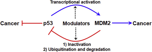 Natural Products Targeting The P53 Mdm2 Pathway And Mutant