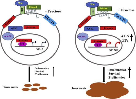 The Dark Face Of Fructose As A Tumor Promoter Sciencedirect