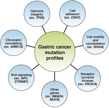 gastric cancer genes
