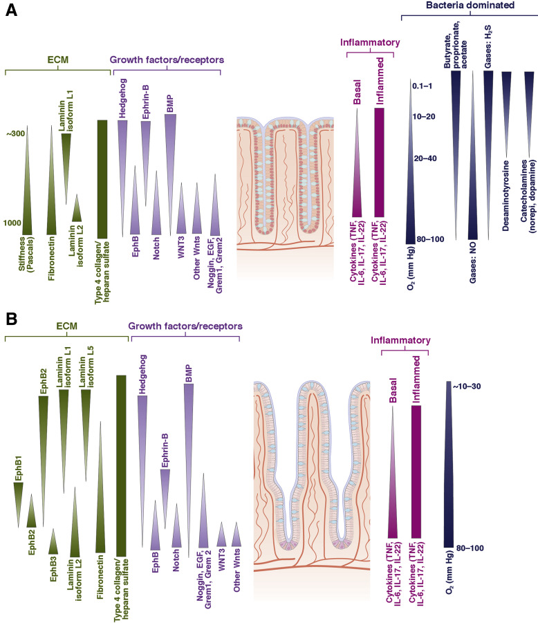 Bioengineered Systems And Designer Matrices That Recapitulate The Intestinal Stem Cell Niche Sciencedirect