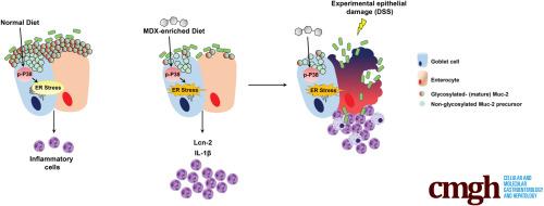 The Food Additive Maltodextrin Promotes Endoplasmic