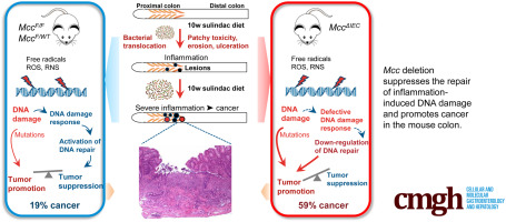 Mouse Model Of Mutated In Colorectal Cancer Gene Deletion Reveals Novel Pathways In Inflammation And Cancer Sciencedirect