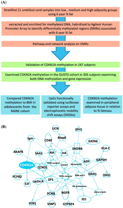 Anril promoter dna methylation a perinatal marker for later statistical tests to identify differentially methylated regions dmrs malvernweather Choice Image