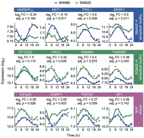 A Systems-Level Analysis Reveals Circadian Regulation of Splicing in