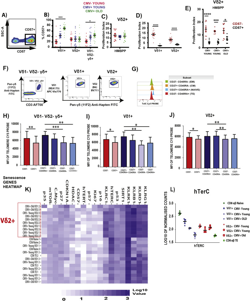Mapping of γ/δ T cells reveals Vδ2+ T cells resistance to senescence
