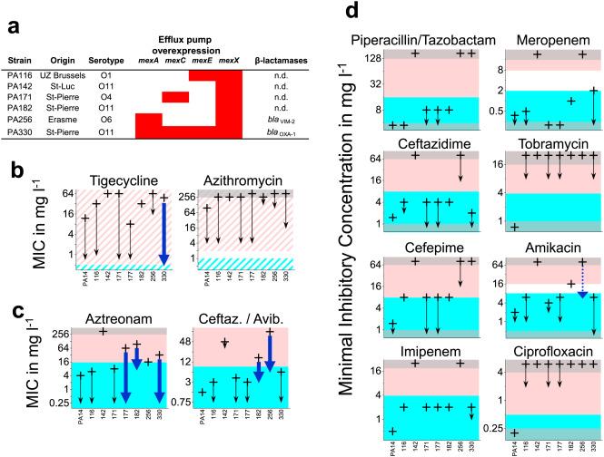 Quantitative contribution of efflux to multi-drug resistance
