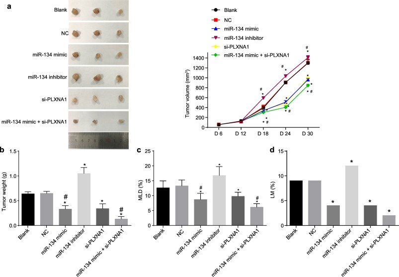 MicroRNA-134 prevents the progression of esophageal squamous