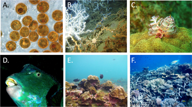 Restaurante els corals betting best binary options affiliate programs