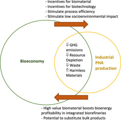 Producing PHAs in the bioeconomy — Towards a sustainable
