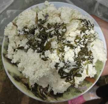 Curd with nanjujǝk (common knotgrass, Polygonum arenastrum) prepared in a ...